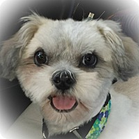 Adopt A Pet :: Quizno - LaGrange, OH