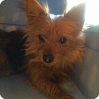 Adopt A Pet :: Rita - Fairview Heights, IL