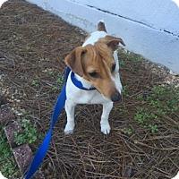 Adopt A Pet :: Indy - Alpharetta, GA