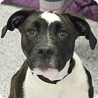 Adopt A Pet :: Emma - Huntley, IL