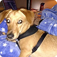 Adopt A Pet :: Rosalie - Beavercreek, OH