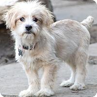 Adopt A Pet :: Ashby - pending - Norwalk, CT