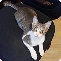 Adopt A Pet :: Louboutin (8.15.15) (TH) - Orlando, FL