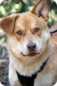Shepherd (Unknown Type) Mix Dog for adoption in Marietta, Georgia - Ozzy