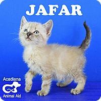 Adopt A Pet :: Jafar - Carencro, LA
