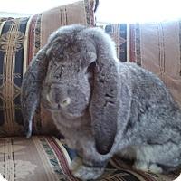 Adopt A Pet :: Theodore - Watauga, TX