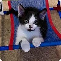 Adopt A Pet :: Quinton - Duluth, GA