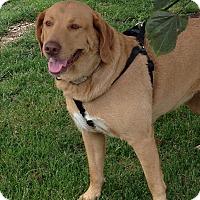 Adopt A Pet :: Carmella - Radford, VA