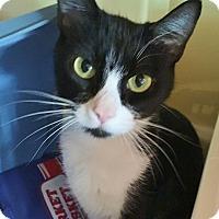 Adopt A Pet :: Bronte - Salisbury, MA