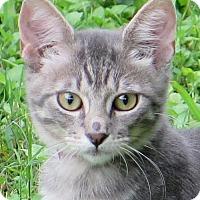 Adopt A Pet :: Jamey - Gonzales, TX