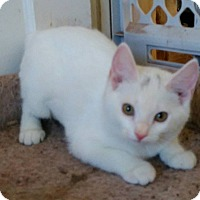 Adopt A Pet :: Luna - cuddly - Madison, TN