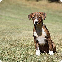 Adopt A Pet :: Harris - Groton, MA