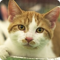 Adopt A Pet :: Samuel - Great Falls, MT