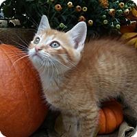 Adopt A Pet :: Winston - Barrington, NJ