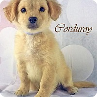 Adopt A Pet :: Corduroy-VIDEO! - Griffin, GA