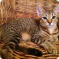 Adopt A Pet :: Dory - Savannah, GA