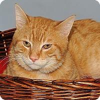 Adopt A Pet :: Donaldson - Gatineau, QC