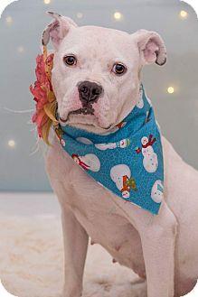 Terrier (Unknown Type, Medium) Mix Dog for adoption in Flint, Michigan - Monique