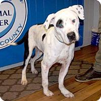 Adopt A Pet :: 16-d12-043 Petey - Fayetteville, TN