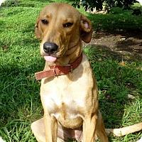 Adopt A Pet :: Bessie - Sunnyvale, CA