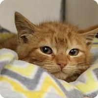 Adopt A Pet :: Char - Columbia, SC
