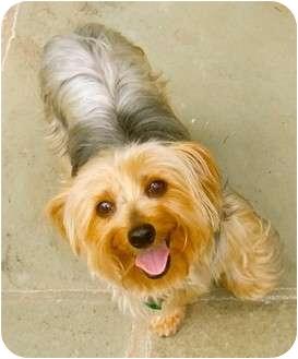 - Florida Dog Rescue - ADOPTIONS - Rescue Me!