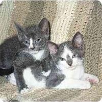 Adopt A Pet :: Jaime - Secaucus, NJ