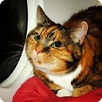 Adopt A Pet :: Pepsi - Cheyenne, WY