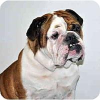 Adopt A Pet :: Butch - Port Washington, NY