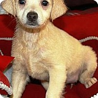 Adopt A Pet :: Polara - Gilbert, AZ