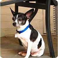 Adopt A Pet :: Bitsy Lu - Jacksonville, FL