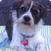 Adopt A Pet :: RI OSCAR - W. Warwick, RI