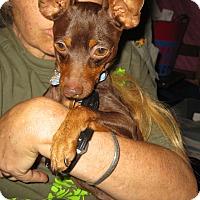 Adopt A Pet :: Giorgio - Oceanside, CA