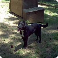 Adopt A Pet :: Tucker - Charlemont, MA
