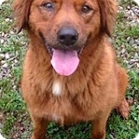 Adopt A Pet :: Jules - Brattleboro, VT
