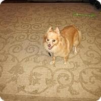Adopt A Pet :: Quincy (Owner Surrender) - Philadelphia, PA