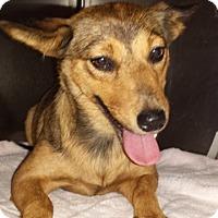 Adopt A Pet :: Penny - Carteret/Eatontown, NJ