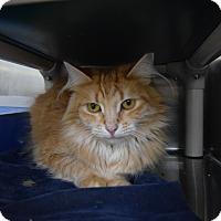 Adopt A Pet :: Mama - Elyria, OH