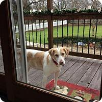 Adopt A Pet :: Brenna - Livonia, MI
