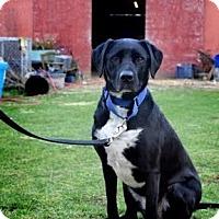 Adopt A Pet :: Abbey - McKenna, WA