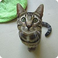 Adopt A Pet :: Ambrose - Chula Vista, CA