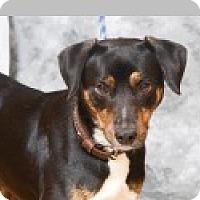 Adopt A Pet :: Romeo - Pittsboro, NC