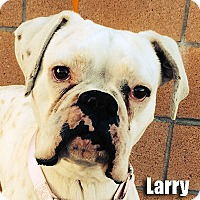 Adopt A Pet :: Larry - Encino, CA