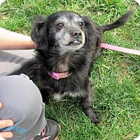 Adopt A Pet :: Cassie - Harrisburg, NC