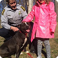 Adopt A Pet :: Bree - Bloomfield, CT