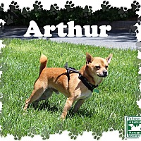 Adopt A Pet :: Arthur - Fallston, MD