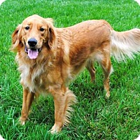 Adopt A Pet :: ROLLO - Andover, CT
