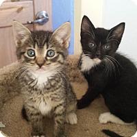 Adopt A Pet :: Beast - Scottsdale, AZ