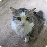 Adopt A Pet :: Lola - Monroe, CT