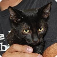 Adopt A Pet :: Harry - Brooklyn, NY
